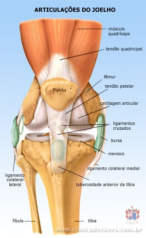 anatomia joelho anterior