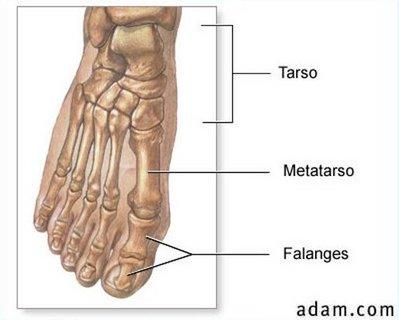 ossos dos pés