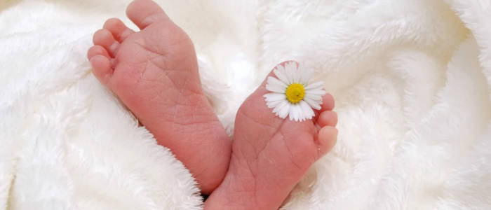 pés de bebê com flor de camomila entre os dedos